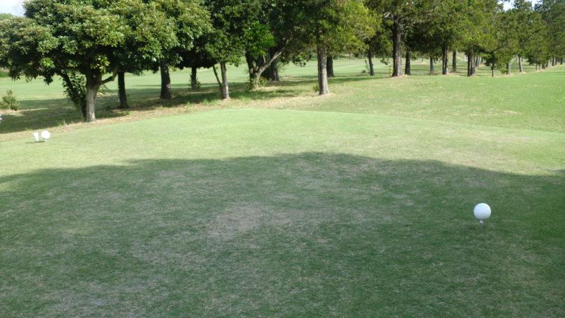 ゴルフ場のレギュラーティー