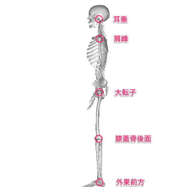 基本的立位肢位
