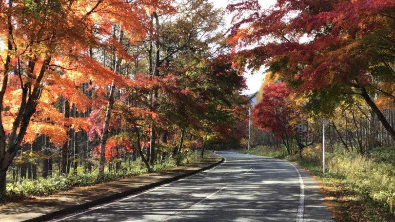 八ヶ岳倶楽部の前の道