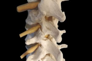 脊柱 腰椎